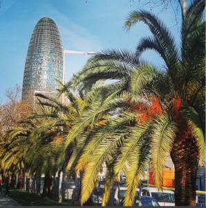 Palm Trees in Barcelona