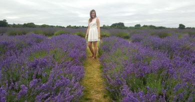 Lavender Field Forever